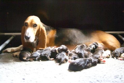 Amande en haar pups