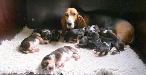 trotse Amande met haar pups