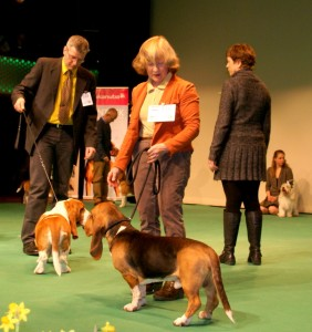 Emilion de Bérénice op de hond van het jaar show