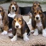 Pups van Doremi en Emilion de Bérénice