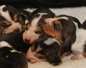 ris-Marion-puppy's093