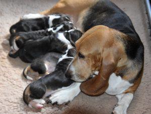 tevreden pups