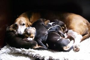 Doremi geniet van haar pups